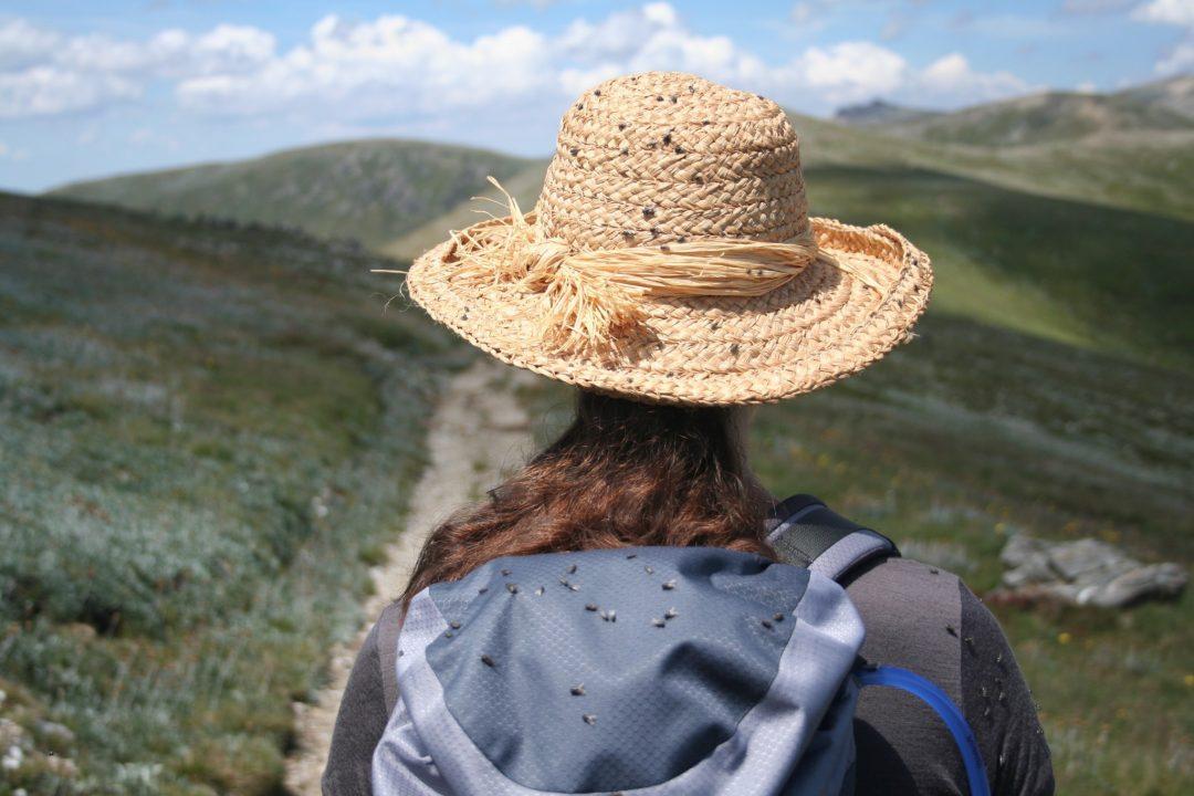 Best day hikes Australia