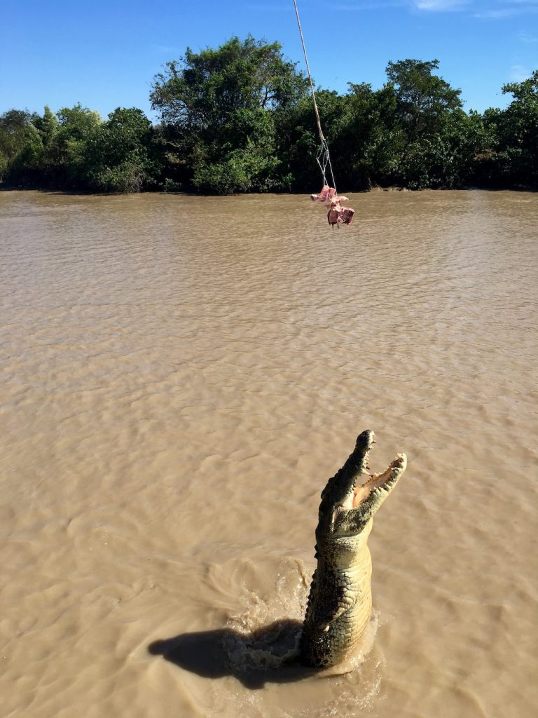 Spectacular Jumping Croc Cruise
