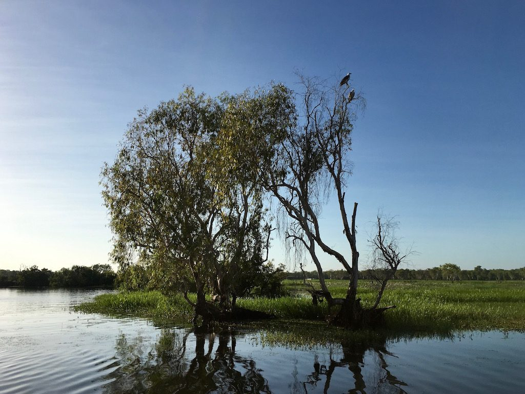 Yellow Water Birdlife