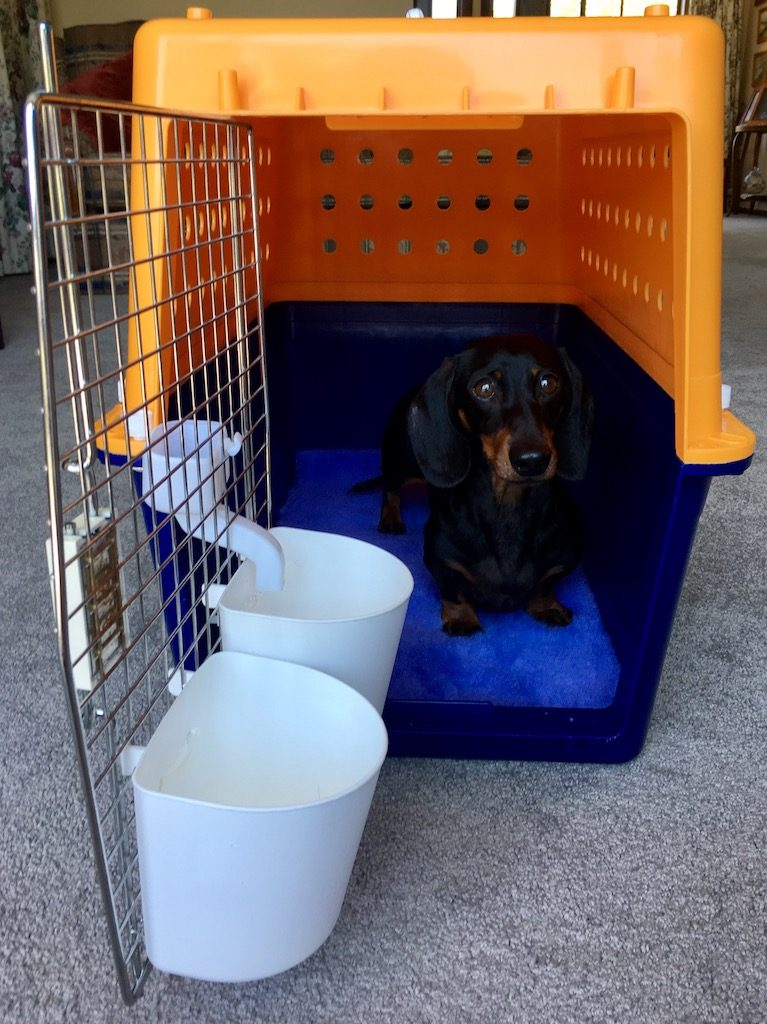 Jetpets review: Schnitzel in his Jetpets crate