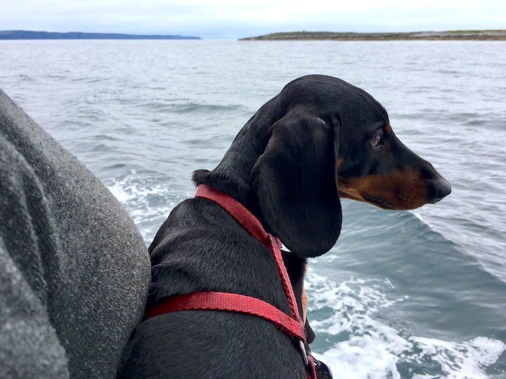 Aran Islands Dog on Boat