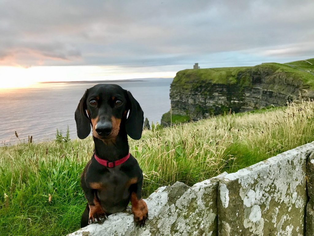 Visit Ireland with dog from UK