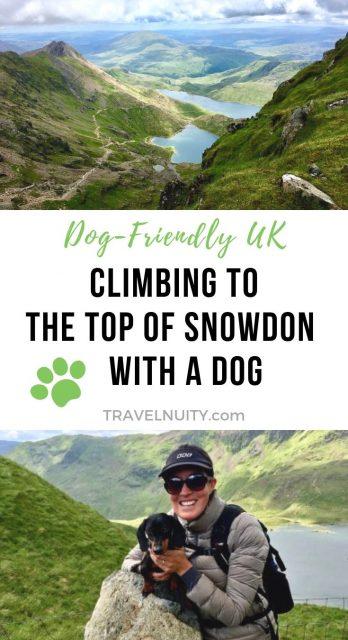 Climbing Snowdon with a Dog pin