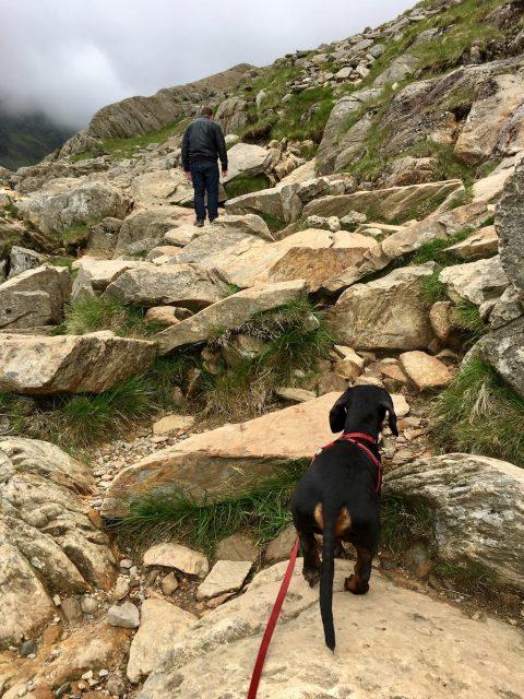 Schnitzel Climbing