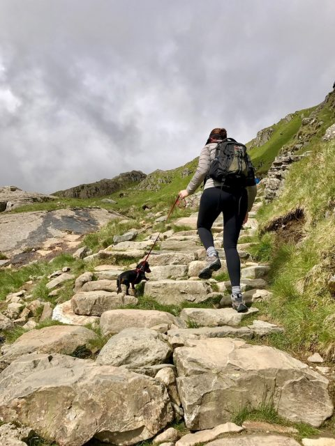 Steps with Schnitzel