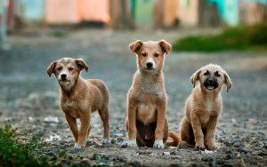 Dog Travel Blog