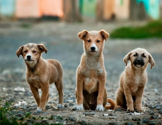 Dog-Friendly Travel Blogs