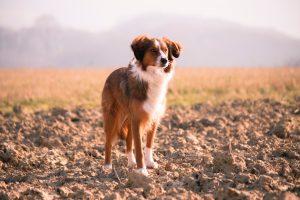 Dog Friendly Destinations