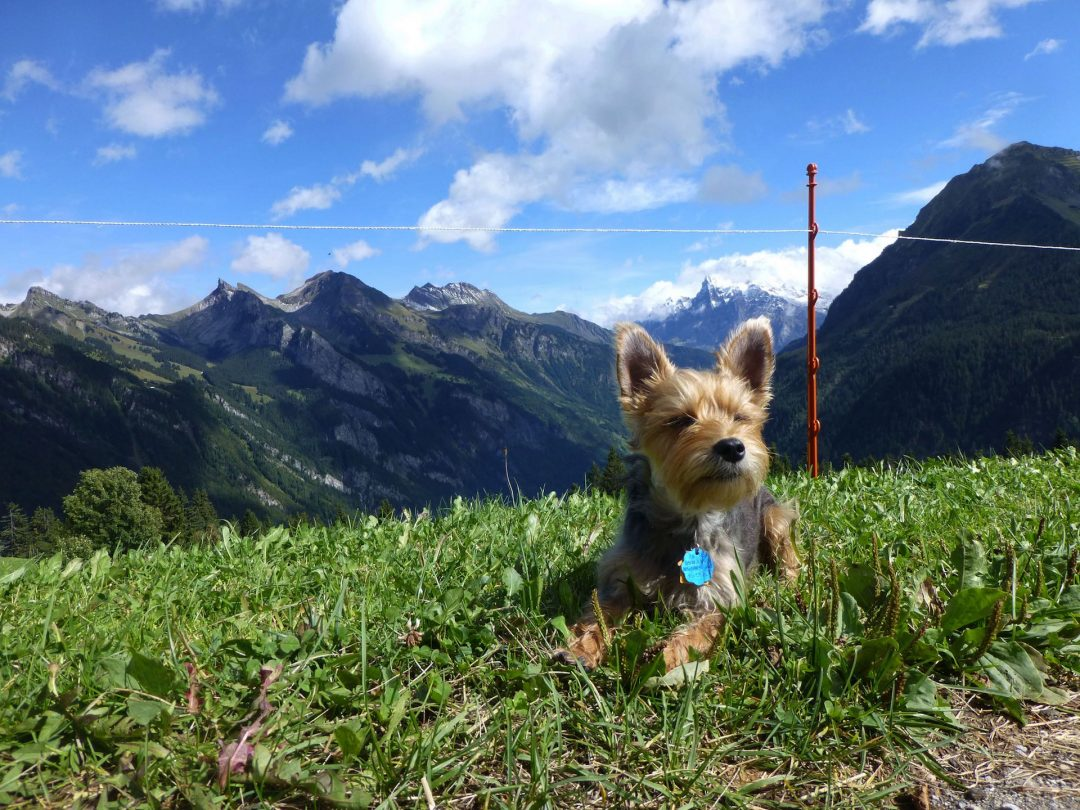 Is Switzerland dog-friendly?