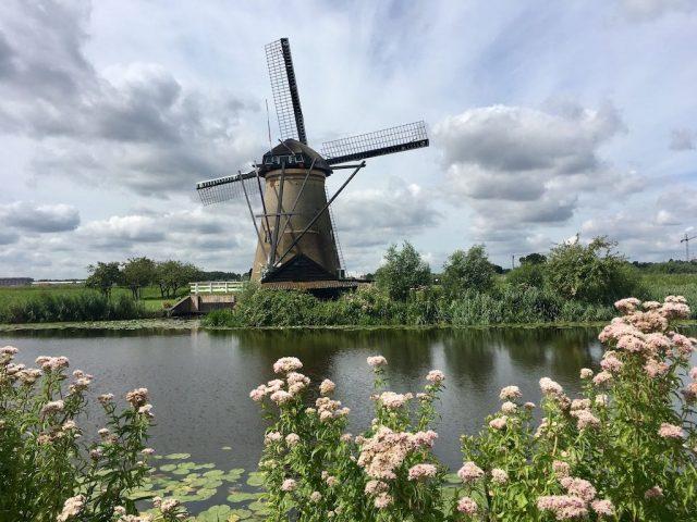Kinderdijk with Flowers