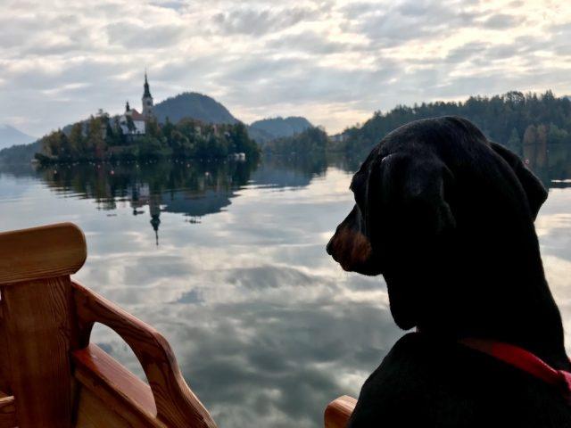 Lake Bled Cruise with Dog