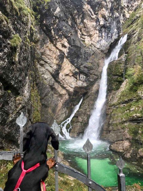 Savica Waterfall with Dog