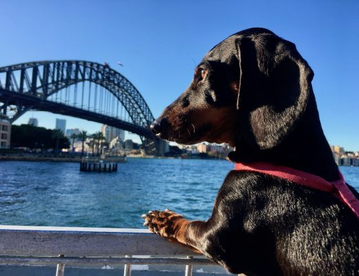 Dog-Friendly Sydney