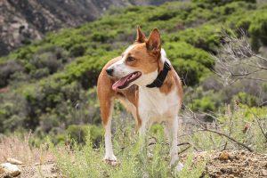 dog-friendly day hikes usa