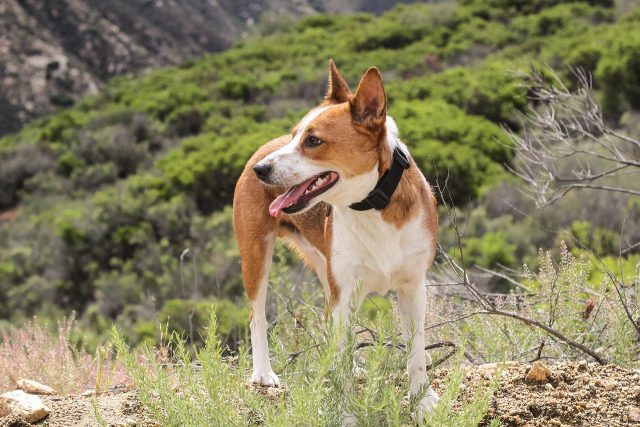 dog-friendly day hikes usa