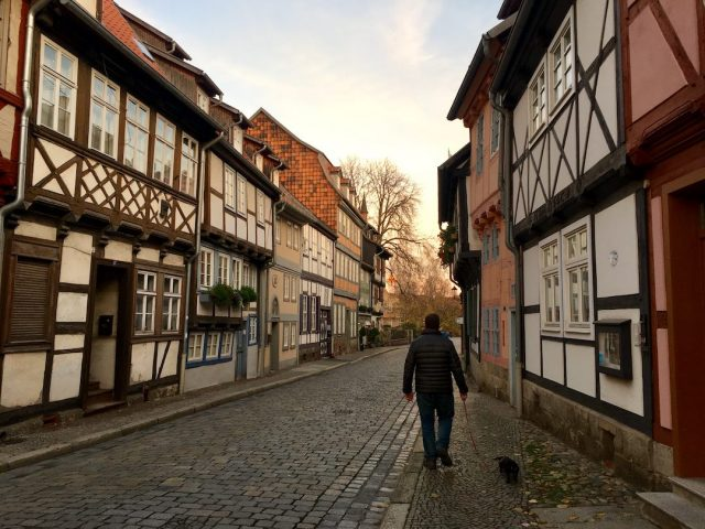 Traveling around Europe with a dog