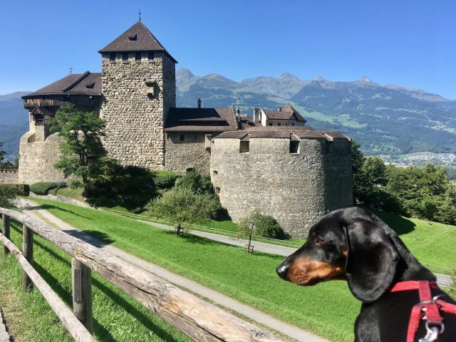 Traveling in Europe with a dog