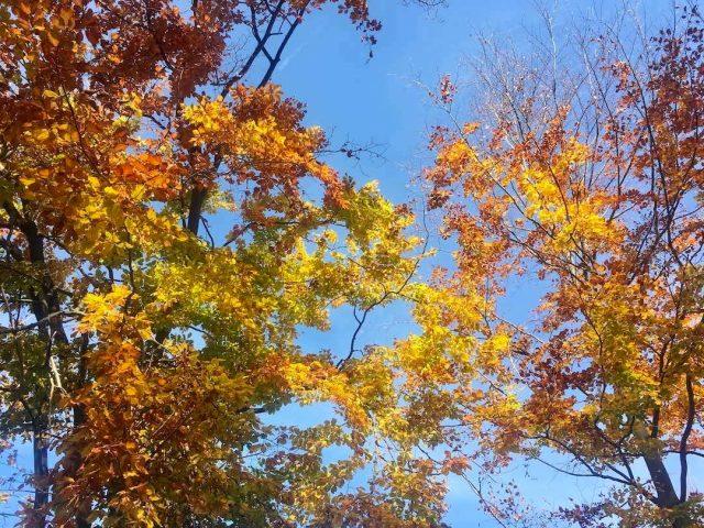 Colourful Autumn leaves in Slovakia