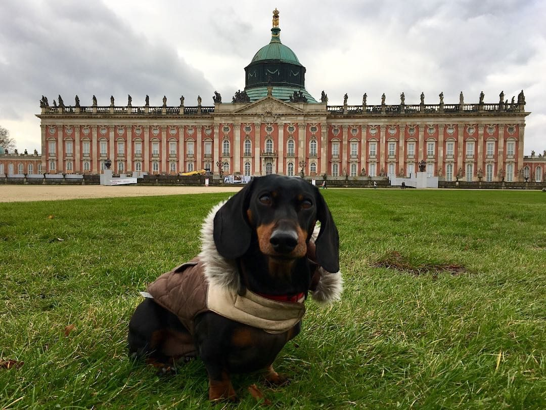 Dog-Friendly Things to Do in Germany