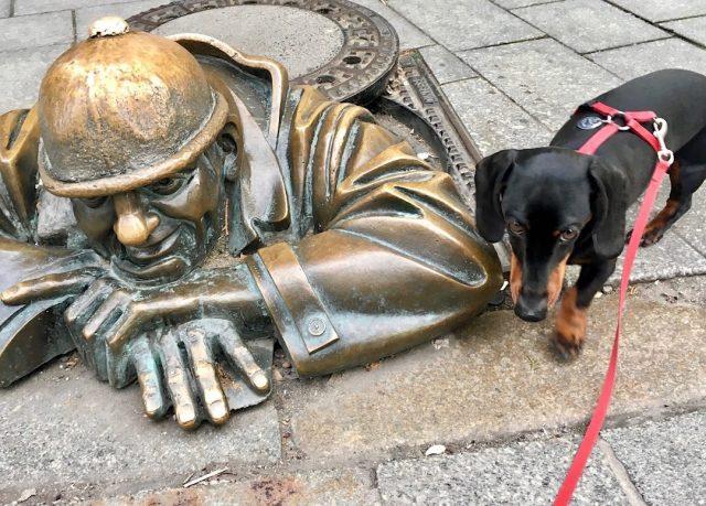 Dog friendly Bratislava