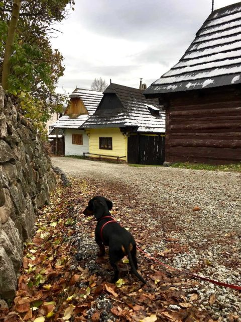 Dog in village of Vlkolínec, Slovakia