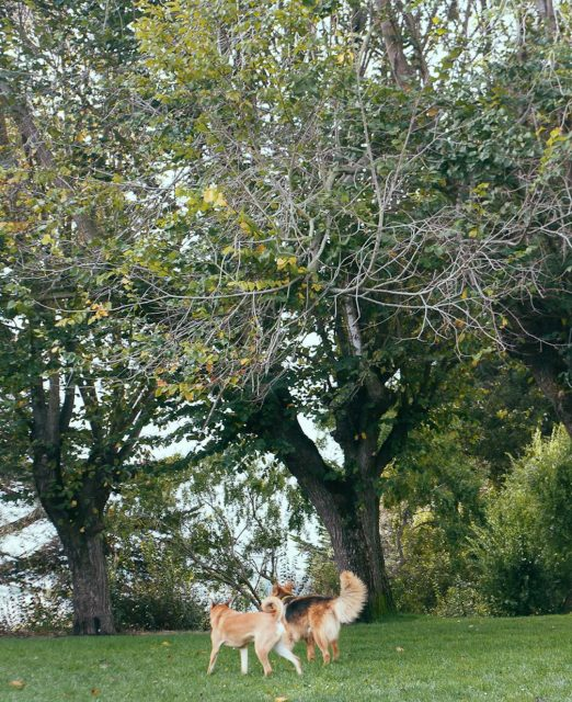 Dog-friendly parks in San Francisco