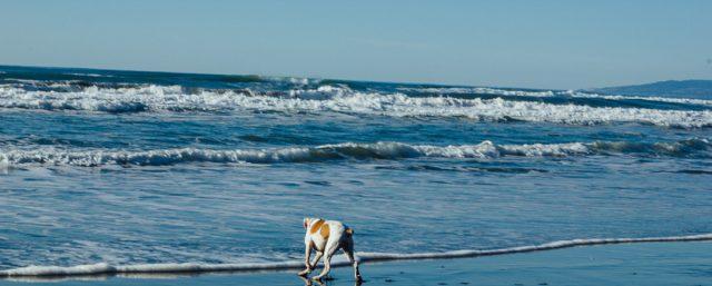 Dog-friendly beaches in San Francisco