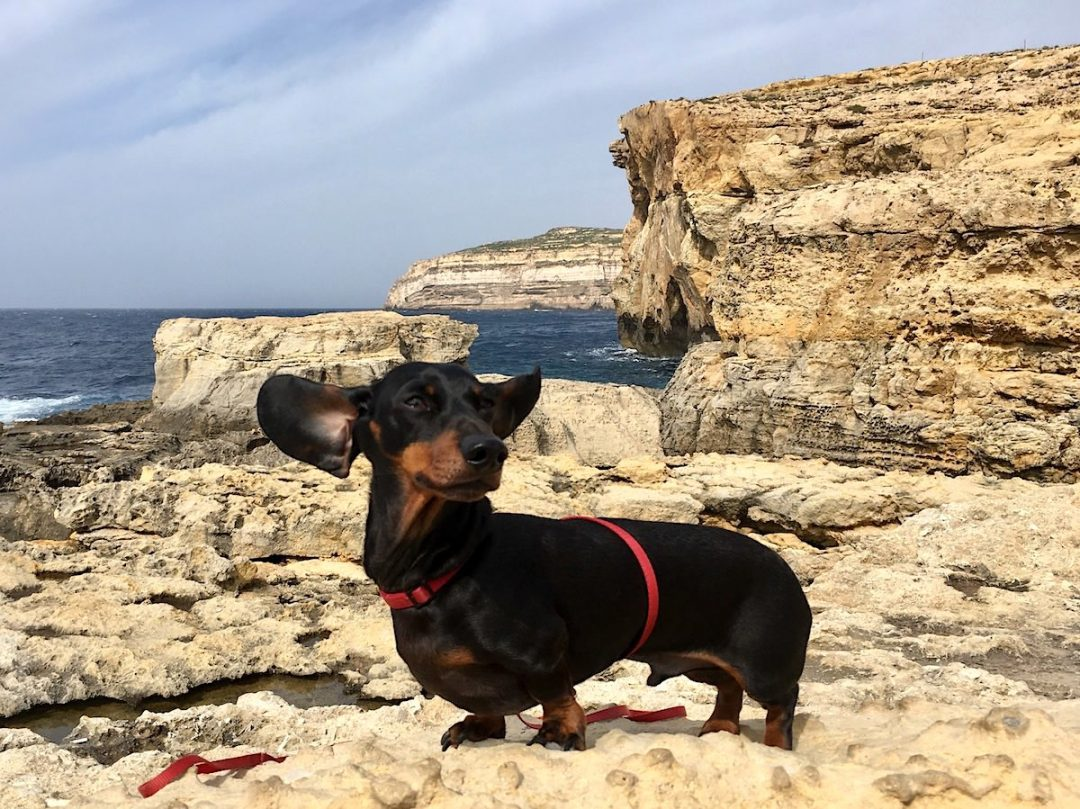Pet travel to Malta