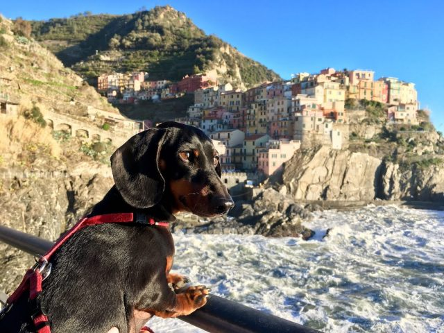 Visit Cinque Terre with a dog