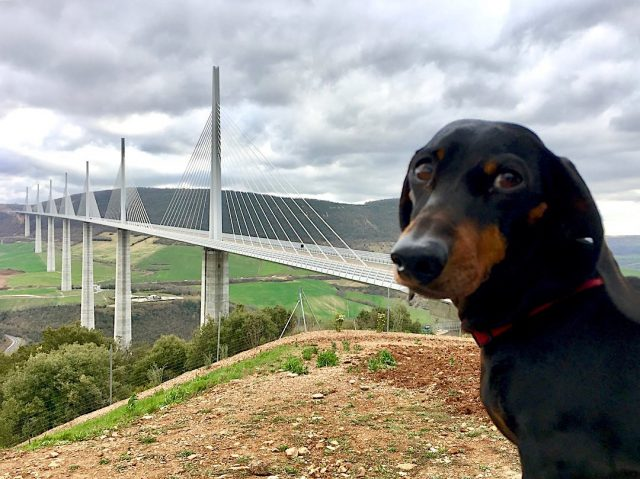Driving to Spain from UK with a Dog