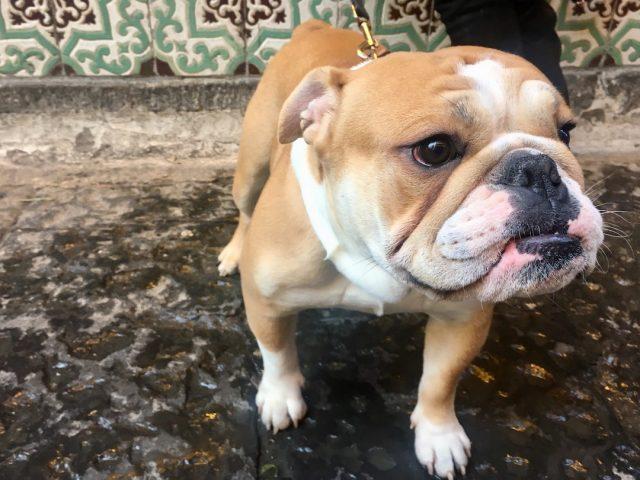 Dog-friendly Naples