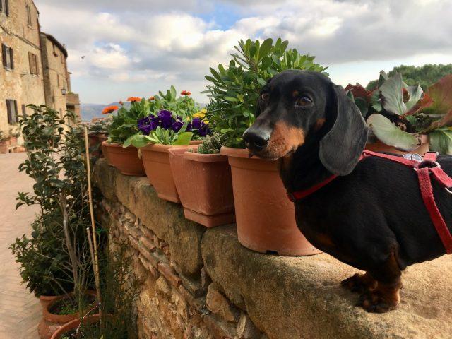 Dog-friendly Tuscany