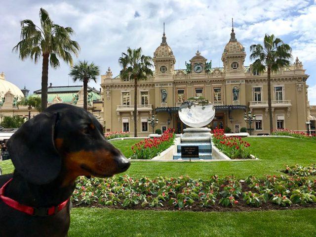 Dog-friendly Monaco
