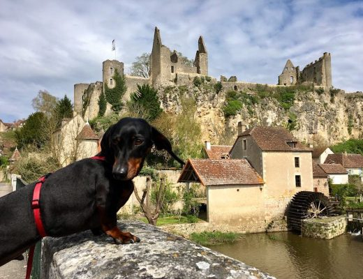 Dog-Friendly things to do in France