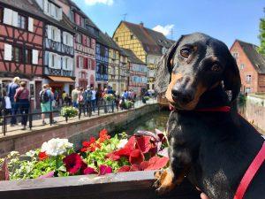 Dog-friendly France