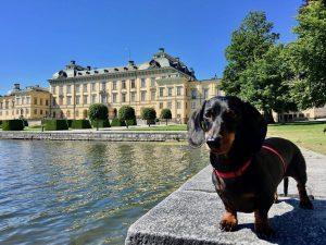 dog-friendly palace Europe