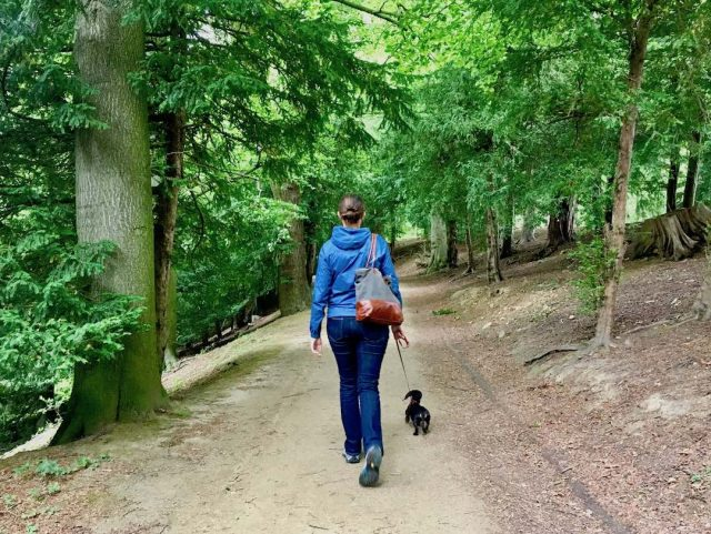 Things to do in England with dogs
