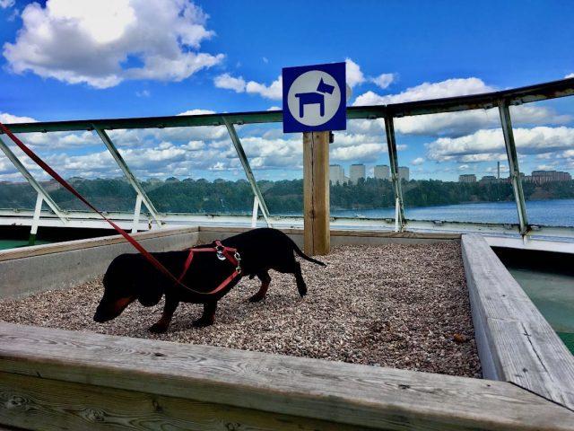 Tallink Silja Line dog facilities