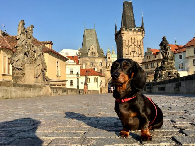 Dog-friendly Prague