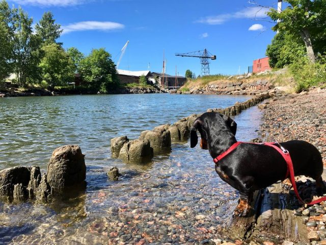 Dog-friendly Finland