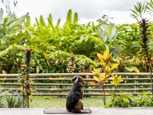 Help the stray dogs of Bali