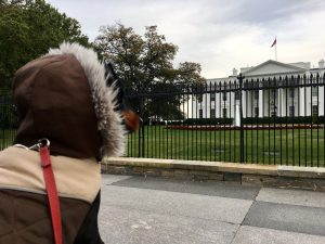 Travel with dog to USA