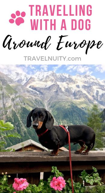 Travelling in Europe with a Dog