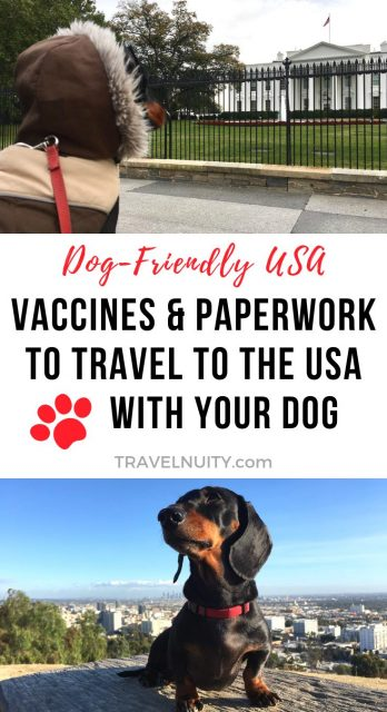 How to bring a dog to usa