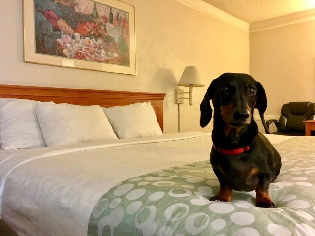 Hotel Chains That Allow Dogs