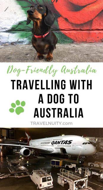 Bringing a Dog to Australia