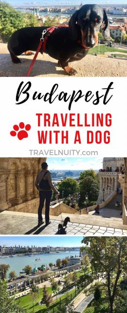 Visit Budapest with a dog
