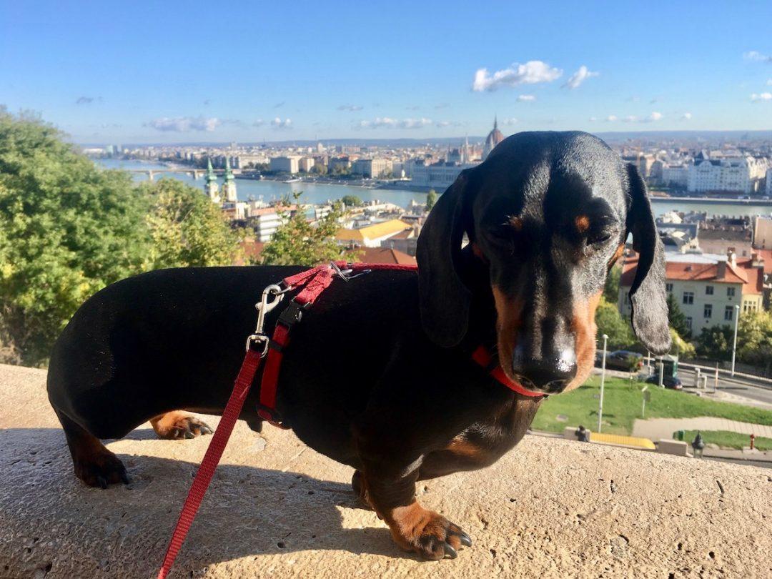 Dog-friendly Budapest