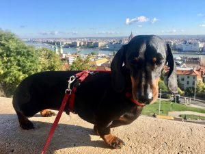 Dog-friendly Budapest
