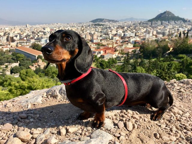 flying to greece with a dog